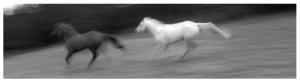 leslie's horses 1