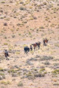 wild horses on track