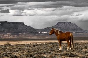 _Wild_Horse_Photo_LEE5812
